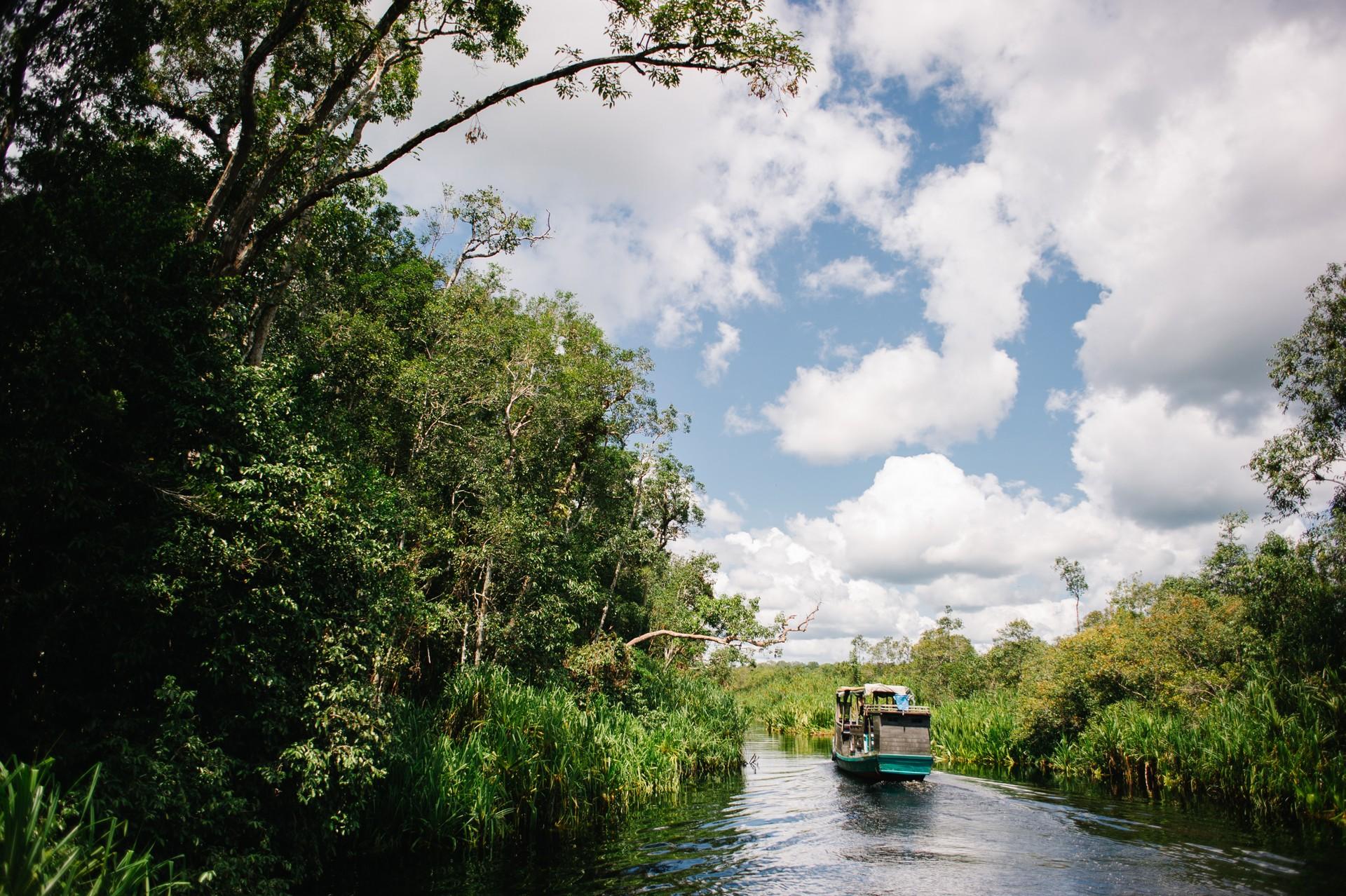 A klotok boat sails down the river in Tanjung Puting, Indonesia