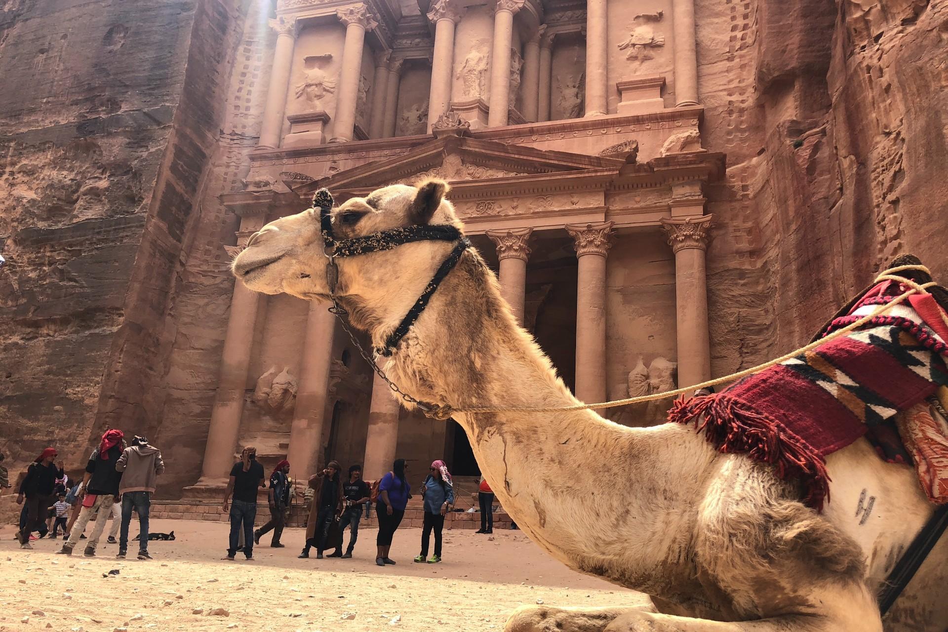 Camel outside the Treasury, Petra