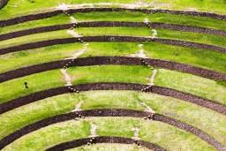 Inca Agriculture
