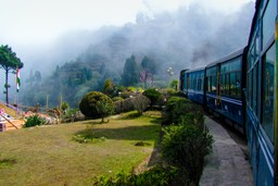 Train through the tea plantations in India