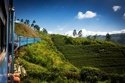 Train ride through Ella tea plantations