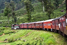 Train through Sri Lankan tea plantations