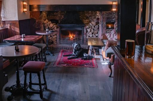 Dog in english pub