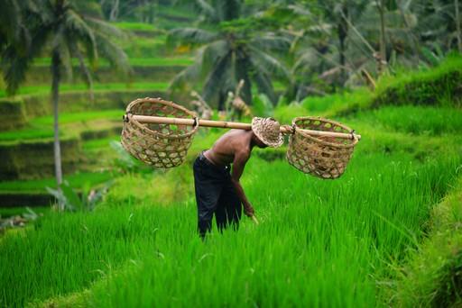 Balinese rice farmer near Ubud