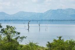 Udawalawe National Park landscape