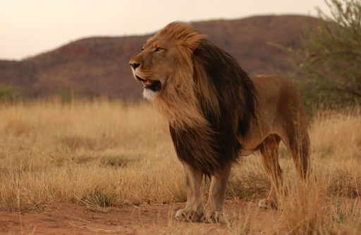 Namibia Holiday Tours | Tailor-made Travel in Namibia