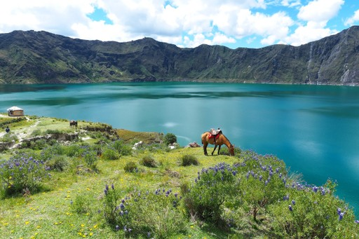 Wild flowers by Quilotoa Lake Ecuador