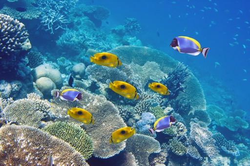 Fish on reef in Mauritius