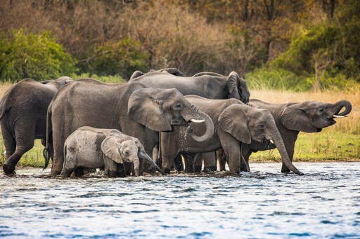 Elephants drinking in Liwonde National Park