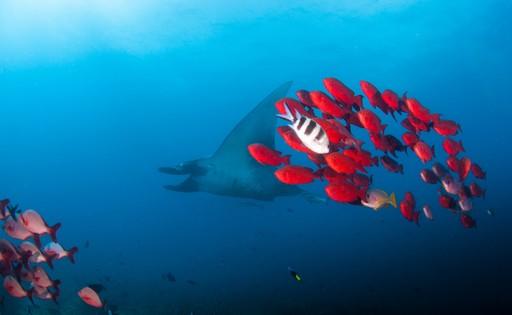 Underwater Mozambique