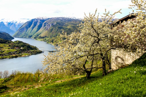 Spring Hardanger fjord