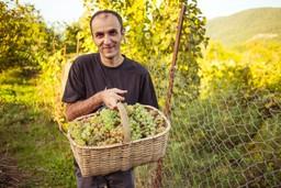 Grape picker in Georgia, Europe