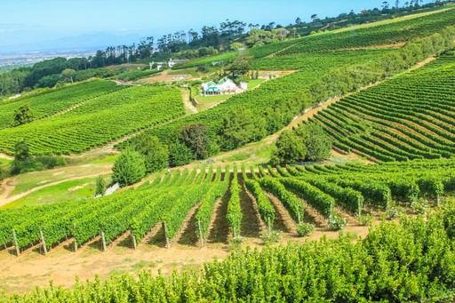 Winelands in South Africa