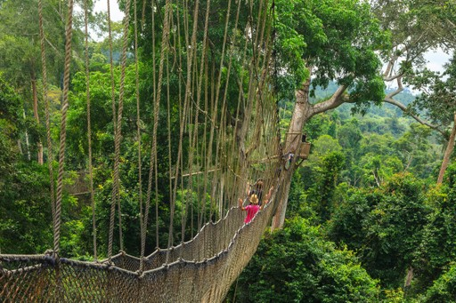 Kakum National Park Tree Canopy Walk Ghana