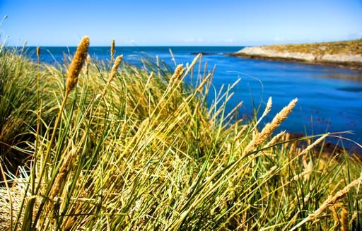 Falklands landscape