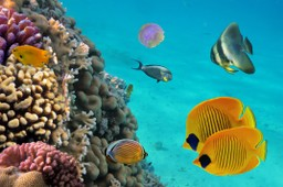 Colourful fish on Costa Rican reef