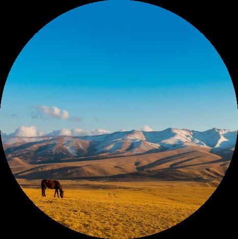 horse grazing in Kazakhstan