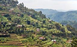 Terraced hills, Muvumba River Valley, Rwanda