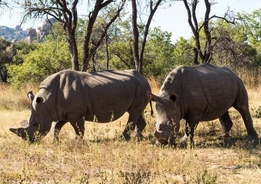 Rhinos Zimbabwe