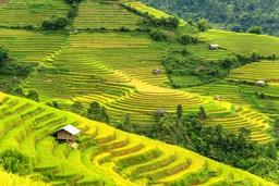 Rice terraces of Vietnam