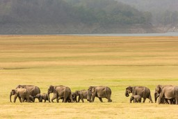 Herd of Elephants, Kenya