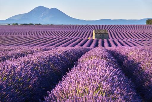 France holidays: lavender fields provence