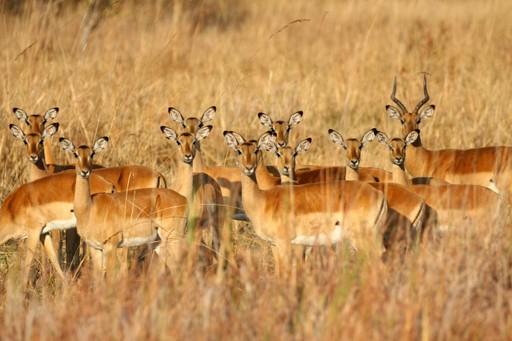 Insider tips: Antelope
