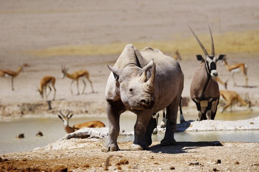 Rhino in Etosha, Namibia