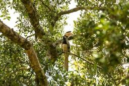 A hornbill in Udawalawe National Park