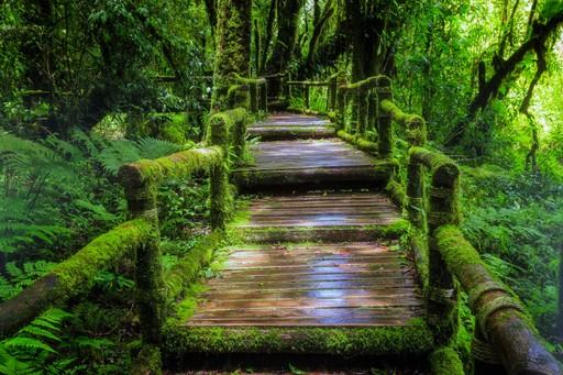 Thailand: An Ka Nature Trail in Doi Inthanon National Park