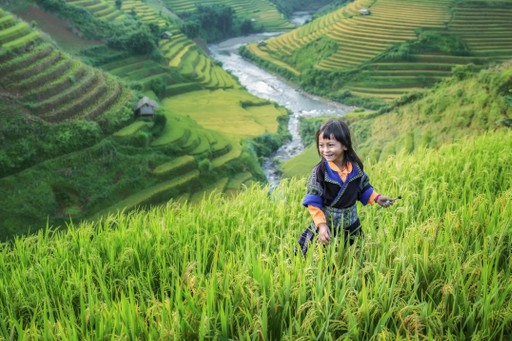 Rice Paddies Laos girl farming