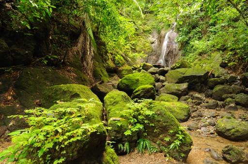 Darien Jungle Panama border near Colombia