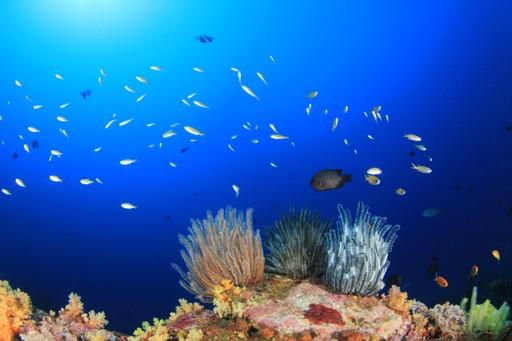 Underwater coral reef, Lankayan Island