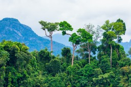 Trees of the Amazon Rainforest
