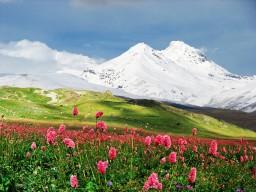Snowy peak and meadow, Caucasus