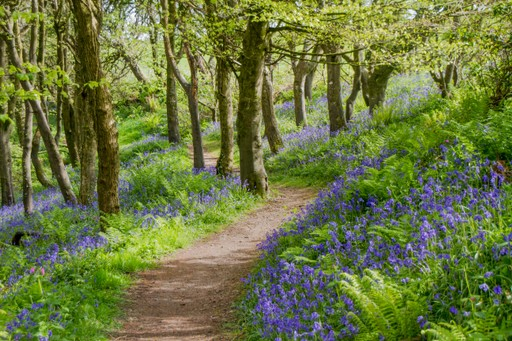 Wales holidays: Bluebell woods