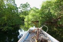 Taking a boat along the delta in Senegal