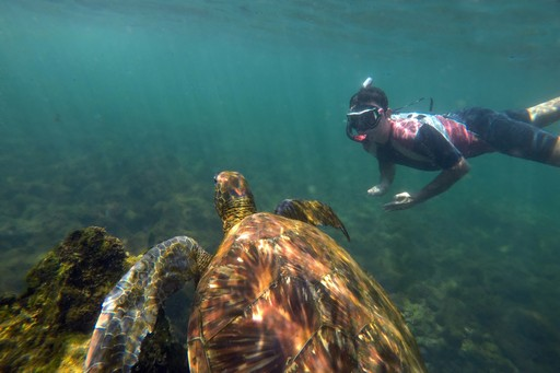 Snorkelling with sea turtles in the Galapagos Islands