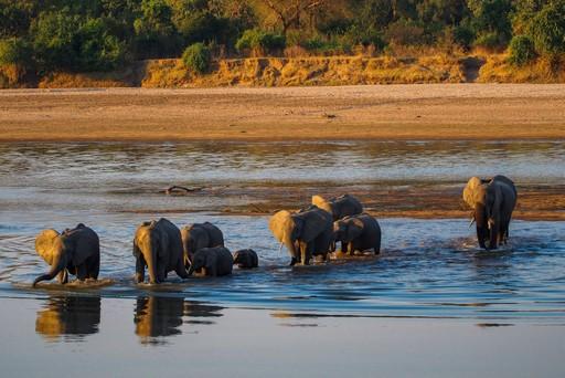 Luangwa National Park Elephants