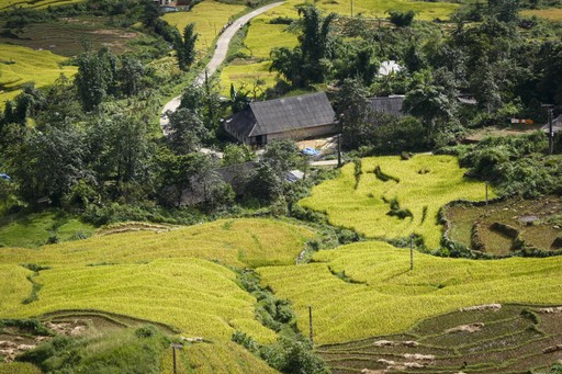 Farm in Laos