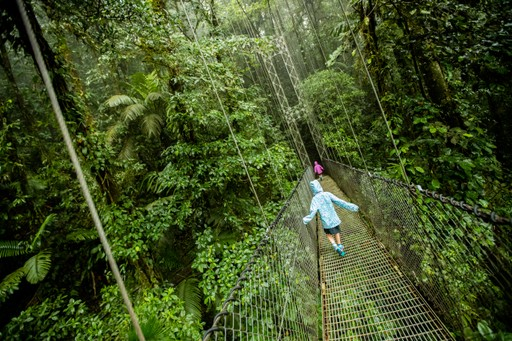 Rainforest canopy tree walk in Costa Rica
