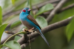 Beautiful blue bird in Senegal